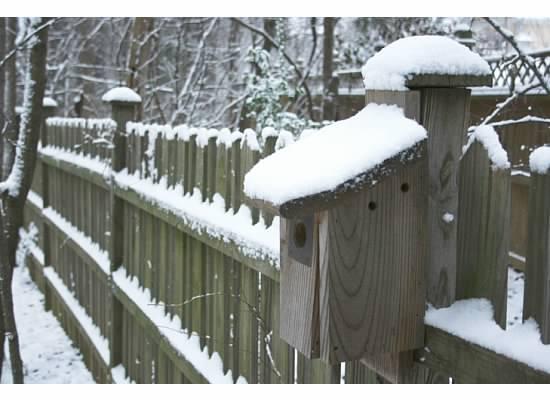 snowy fence copyright 2008 Margot C. Lester
